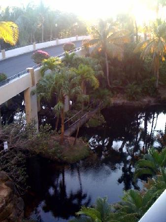 Rio Grande, Puerto Rico: View From My Room
