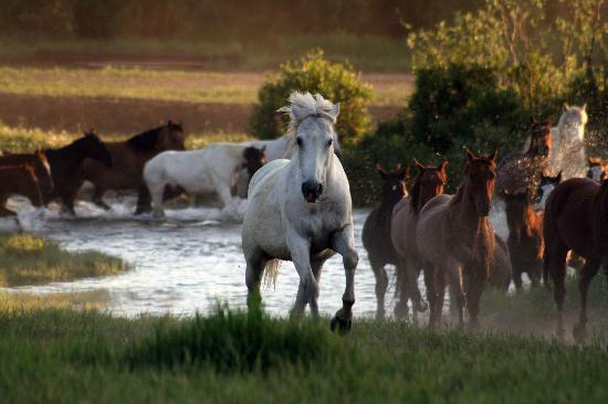 Paradise Guest Ranch: Horses Crossing French Creek