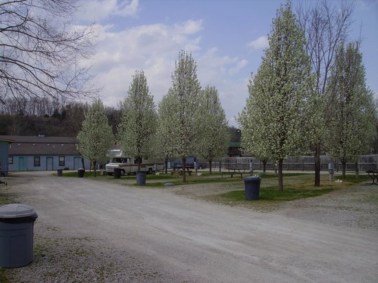 Taneycomo Lakefront Resort and RV Park: Nice size level lots for RVing Great for reuions & get togethers.