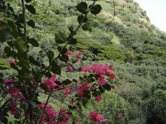 Haleiwa Foto