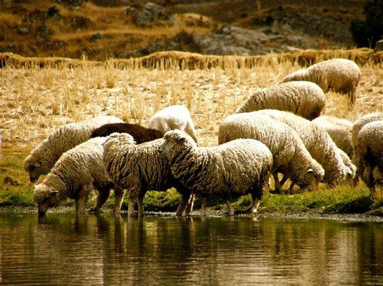 Huaraz, Peru: Animalicos, jeje