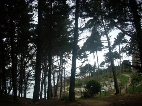 Algarrobo Picture