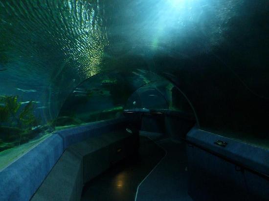 The National Aquarium of New Zealand - Napier NZ - Photo de National ...