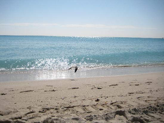 Miami Beach (north, as one website noted it is on the doorstep of South Beach)