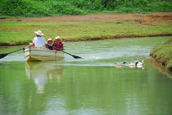 Babatngon, Filippinerna: chasing ducks