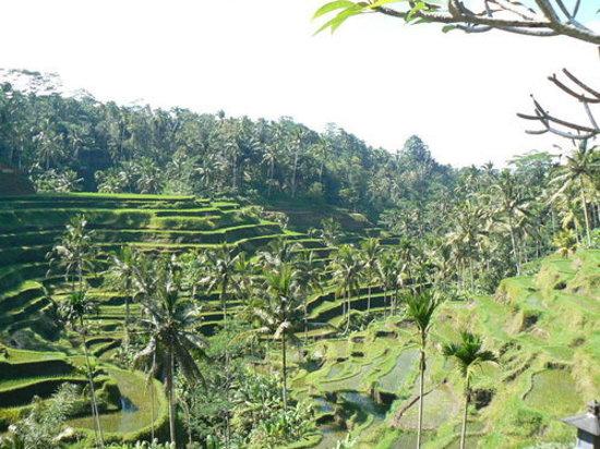 Tegalalang Rice Terrace: tegalalang