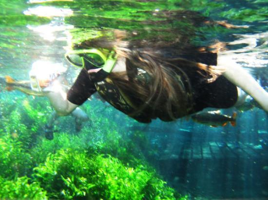 Bonito, MS: Fotografando os peixinhos