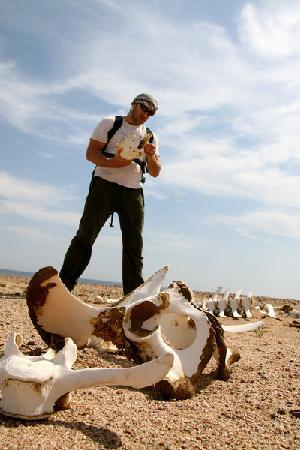 Hike Dahab: Passing camel passings