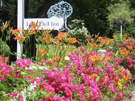 Summer roses at Long Dell Inn