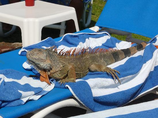 El Cid Marina Beach Hotel: lounge lizard