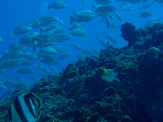 Grand Paradise Samana: Wreck Diving, just off the resort