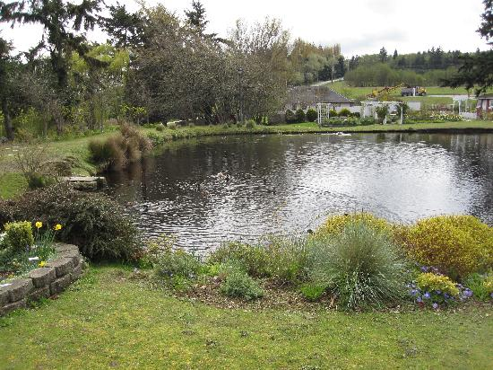 Guest House Log Cottages: duck pond outside Log Cabin
