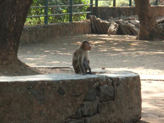 Elephanta Island, India: hay los monetes!!!!