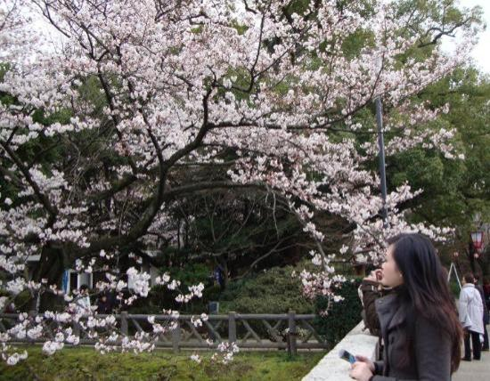 Nagoya, Japão: さくら - sakura