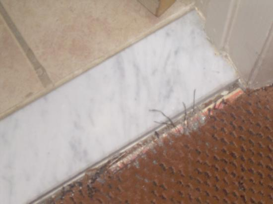 Flagship Hotel Oceanfront: Here is what the carpet looks like between the bathroom and bedroom..yuck..the odor!!! lol
