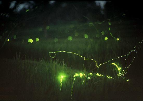 Yone Village Villas: check out these fireflies