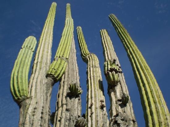 Bilde fra Ensenada