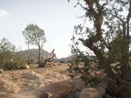 Zdjęcie Taif