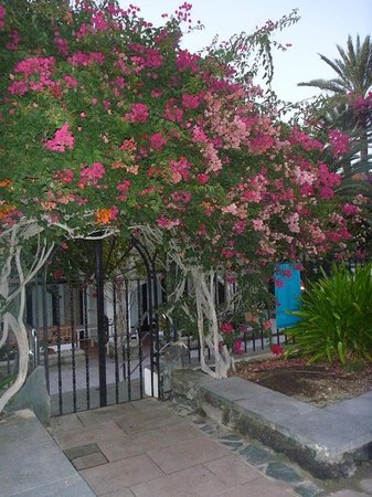 Gran Canaria, España: i wanted to get more pictures of flowers but got side tracked