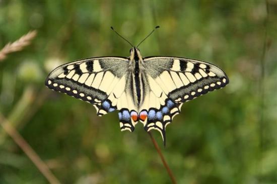 St. Stefan an der Gail, Áustria: Schmetterling auf dem Wanderweg