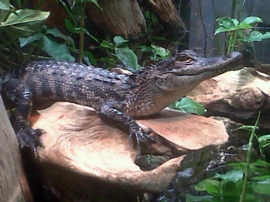 Bilde fra Tennessee Aquarium