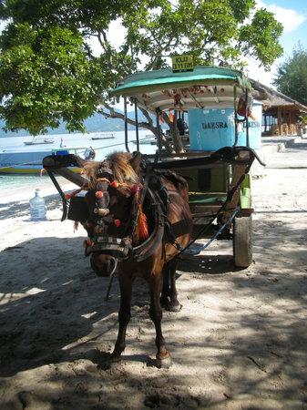 """Biba Beach: il  """"taxi"""" di gili air"""