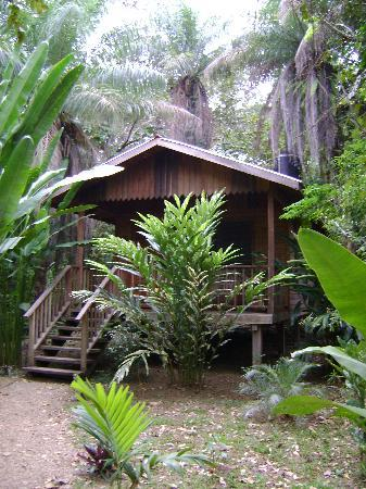 Macaw Bank Jungle Lodge: My cabin