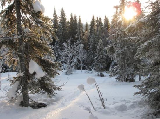 Bilde fra Åre