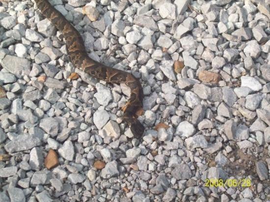 Turrell, Арканзас: snake