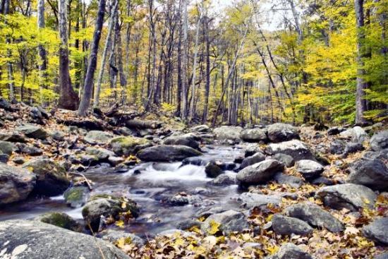 Appalachian Trail: Taken on a hiking trip to Shenandoah