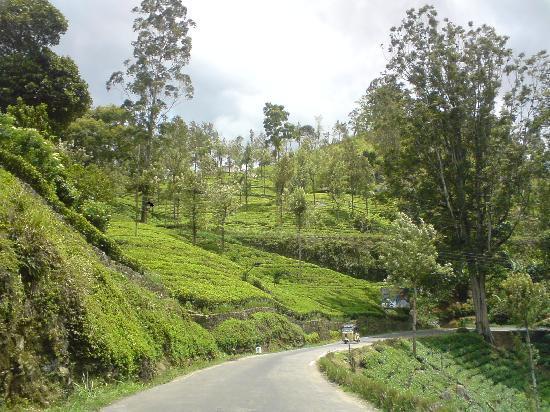 On the road to Nuwara Eliya