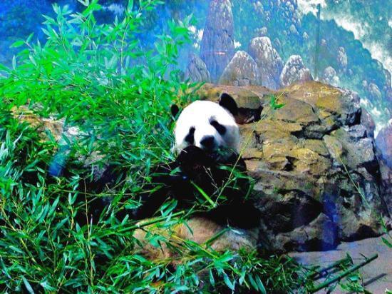 National Zoological Park: Washington DC