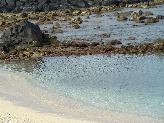 Recif Attitude: la plage