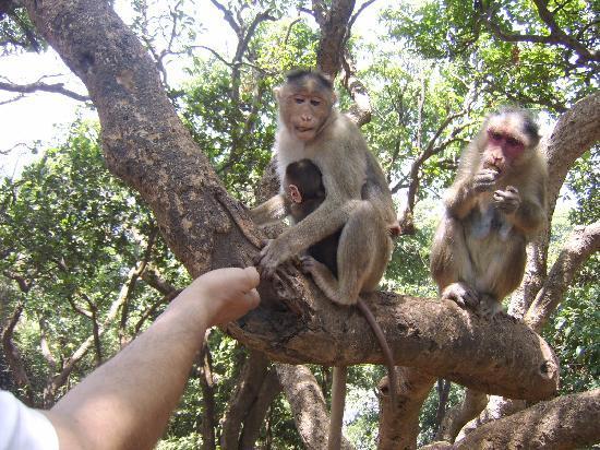 Bharat Hotel : Forest life