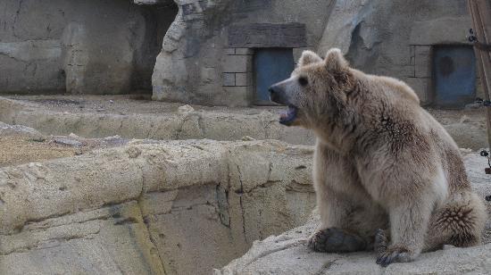 Oasys Mini Hollywood: bear
