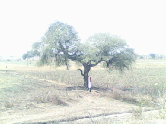 Shirdi Photo