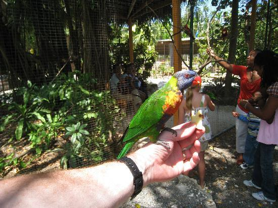 Ardastra Gardens, Zoo and Conservation Center: Parrot feeding