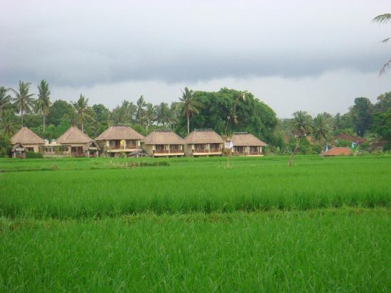 Panorama Hotel : rice fields behind the hotel