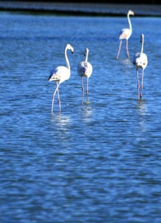Aix-en-Provence, France : Flamingo