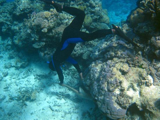 Mai Dive - Astrolabe Reef Resort: Shark encounter with Siwa