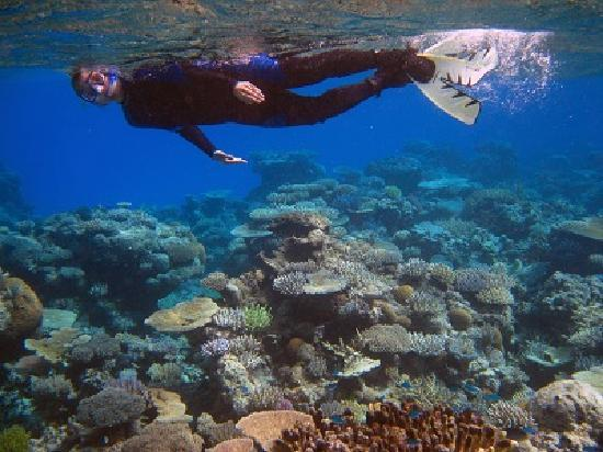 Mai Dive - Astrolabe Reef Resort: snorkelling