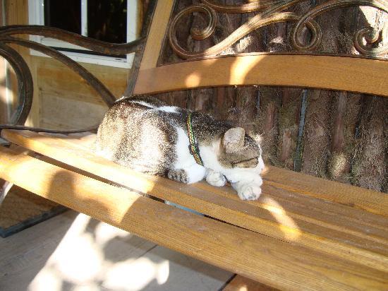 Xanadu Island Resort: Dino - Xanadu's house cat