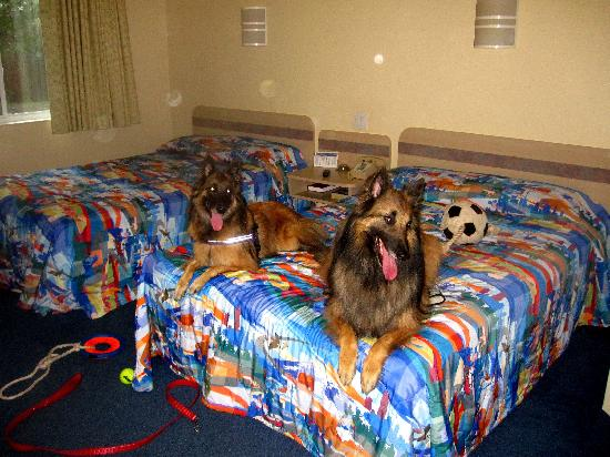 Motel 6 Portsmouth: Our dogs had a good time too!