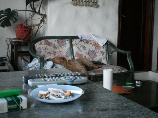 Raices Finca: Außer dieser Bank gab es noch einen ähnlichen Stuhl und 2 wackelige Küchenstühle