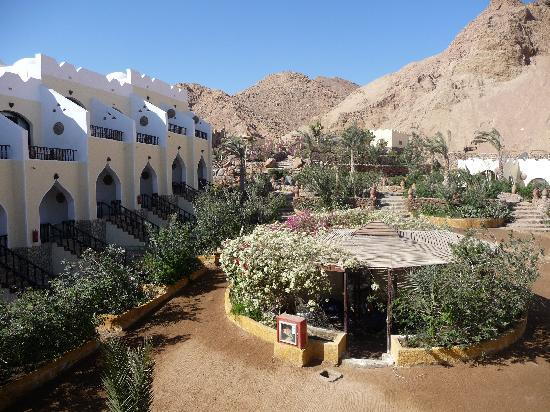 The Bedouin Moon Hotel: Backyard