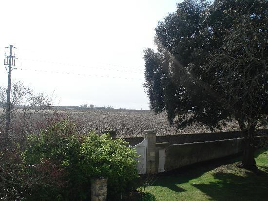 Chateau Ormes de Pez : The view