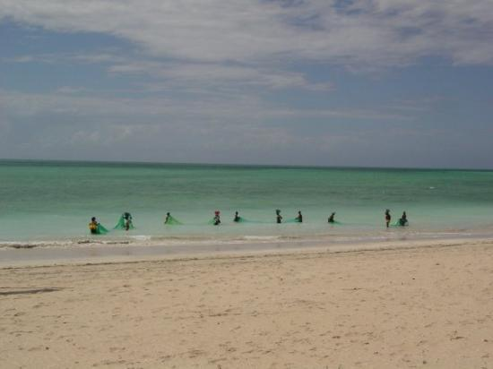 women net fishing off the beach near Pemba, Mozambique