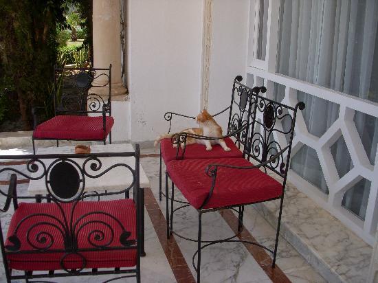 Hotel Green Golf: les chats trouvent leur bonheur