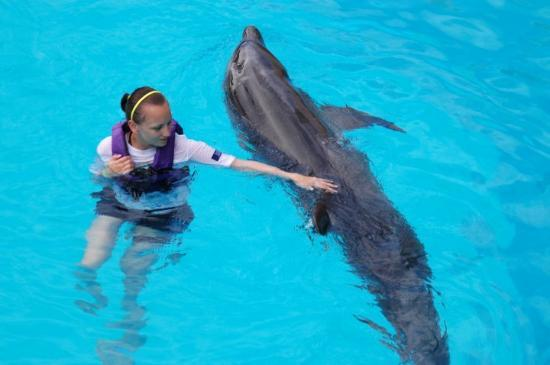 Interactive Aquarium: swimming with Kimba the bottlenose