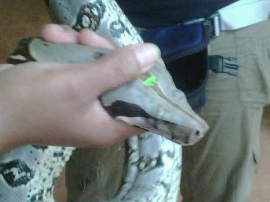 Rio Branco, AC: Una serpiente carnivora